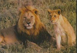 Parc Zoologique De La Barben - Lions - (P) - Pelissanne