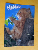 CHAT CHATON - Katzen