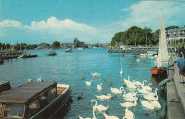 Postcard  Oulton Broad & Gaggle Of Swans My Ref B14467MD - Altri