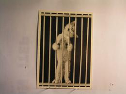 Animaux & Faune > Chats - Chat Prisonnier - Katzen