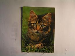Animaux & Faune > Chats - Chat Domestique - Katzen