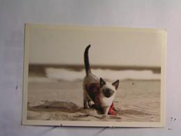 Animaux & Faune > Chats - Chat - Katzen