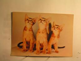 Animaux & Faune > Chats - Chats - Katzen