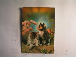Animaux & Faune > Chats - Chat - Carte Musicale Ne Fonctionne Plus - Katzen