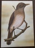 Sao Tomé E Principe: Intero, Stationery, Entier, Turdus Olivaceofuscus - Sparrows