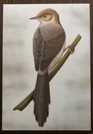Sao Tomé E Principe: Intero, Stationery, Entier, Prinia Molleri - Sparrows