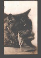 Kat / Chat / Cat - Photo Card - Katzen