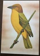 Sao Tomé E Principe: Intero, Stationery, Entier, Xanthophilus Princeps - Sparrows
