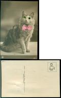 Postkaart Kat Met Echte Kralen Als Ogen En Vlinderdasje Nr. 3482 Niet Gelopen - Katzen