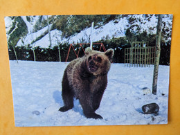 OURS BORCE VALLEE D'ASPE - Bears