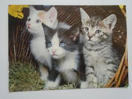 D182347 Hauskatzen - Kitten Kitty Cat Cats Katze Chat - Katzen
