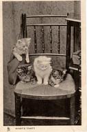 Chats-  Kitten,cats -kleine Katzen - 4 Poesjes Op Stoel - Katzen