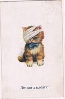 Chat Blessé - Cat -katze - Gewonde Poes - Katzen