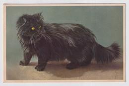 KAT CAT CHAT CHATS - Katzen