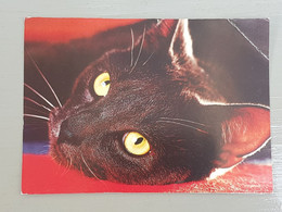 Katzenkopf (gelaufen, 2002), #H43 - Katzen