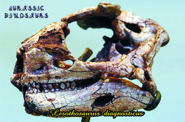 Carte Postale, Animaux Prehistoriques, Jurassic Dinosaurs, Lesothosaurus Diagnosticus - Andere