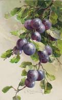 C.Klein.Fruits.GOM Edition Nr.1613 - Klein, Catharina