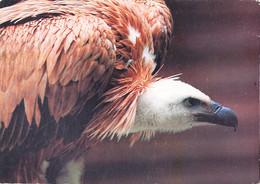 Tuy-   Cpsm CONDOR - Pájaros