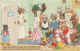 CPSM Animal Humanisé Position Humaine Vétérinaire Divers Chiens Teckel Dackel Daschsund Humour  Illustrateur  2 Scans - Dogs