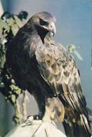 Kui-  Cpsm  AIGLE ROYAL   De VILLARS Les DOMBES - Pájaros