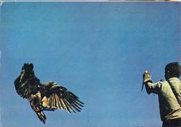 Kui-  Cpsm  VOLERIE Des AIGLES  à KINTZHEIM - Pájaros