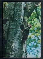 Carte Postale Du Pic Du Canada En Circulation - Sparrows