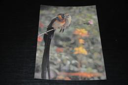 30325-                 CHINA, RESPLENDENT MUNIA - Uccelli