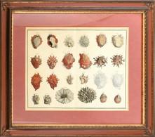 Pieter Tanjé (1706-1761): Tengeri élőlények. Kézzel Színezett Metszet, Papír. Jelzett A Metszeten Nyomtatva. Lap Tetején - Gravures