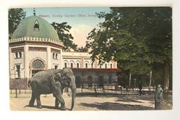Jardin Zoologique De Bâle (Basel). L'éléphant « Miss Jenny » (1926) - BS Basle-Town
