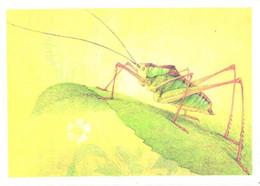 L.V.Aristov:Insect, Grasshopper, Isoimon Riabovi UV., 1990 - Insects