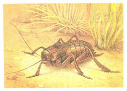 L.V.Aristov:Insect, Grasshopper, Bradyporus Multituberculatus Fisch.-Waldh., 1990 - Insects