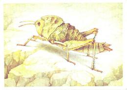 L.V.Aristov:Insect, Grasshopper, Saxetania Cultricollis Sauss., 1990 - Insects