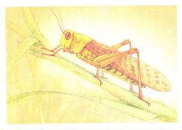 L.V.Aristov:Insect, Grasshopper, Locusta Migratoria L., 1990 - Insects
