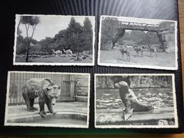 Zoo, Dierenpark, Tierpark / 4 Kaarten Van Zoo Van Antwerpen (zie Foto's) Lot 6 - Otros