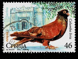 Serbien 2010,Michel# 349 O Birds: Rock Dove (Columba Livia) - Serbia