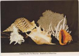 MAURITIUS - ILE MAURICE - COQUILLES DE L'ILE MAURICE - SEASHELLS OF MAURITIUS - CPM Grand Format - Mauritius