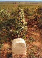 CPM 51 (Marne) Epernay - Champagne Perrier-Jouët - Un Des Vignobles De La Célèbre Côte Des Blancs à Cramant - Reclame