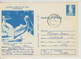 Romania  , 1977 ,  Animals  ,  Birds , Pelican , Post Card, Stationery, Used - Pelicans