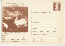 Romania  , 1977 ,  Animals  ,  Birds , Swan , Post Card, Stationery - Pelicans