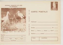 Romania  , 1977 ,  Animals  ,  Birds , Stork , Post Card, Stationery - Pelicans