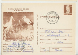 Romania  , 1977 ,  Animals  ,  Birds , Stork , Post Card, Stationery , Used - Pelicans