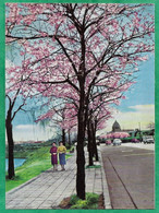 Tokyo Scenery Of Hanzomon In Spring 2scans - Tokyo