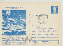 Romania  , 1977 ,  Animals  ,  Birds , Post Card, Stationery , Used - Pelicans