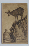 21512 Cartolina Illustrata - Capra - E. L. Hoess - VG Primi 900 - Andere