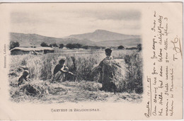 PAKISTAN (INDIA) -  Harvest In Balughistan - VG Vignette - Undivided Rear And Good Pm Etc 1905 - Pakistan