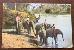 CEYLON - ELEPHANTS CROSSING RIVER  - POST CARD FROM COLOMBO 19/8/37  TO FIRENZE RISPEDITA A HOTEL RUSSIA A VIAREGGIO - Monde