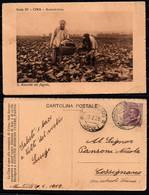 CINA - 1929 - AGRICOLTURA - RACCOLTA DEI FAGIOLI - Cina