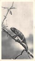 CPSM Moutarde AMORA - SIERRA-LEONE - Caméléon - Timbrée, Oblitérée 1953 ( ͡◕͜ʖ ͡◕) ♦ - Publicité
