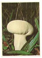 IMAGE CHROMO CHOCOLAT POULAIN Série 7 LA VESSE DE LOUP PERLEE PHOTO FATRAS => Image N° 18 MYCOLOGIE CHAMPIGNON - Poulain