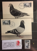 THEMAIC : PIGEON PIGEONS , DUIF , DOVES   On 6 Pages , Postcards, USED, MNH , MH Mixed - Columbiformes